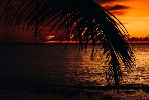 Palma Sea Caribbean Summer Landscape Nature