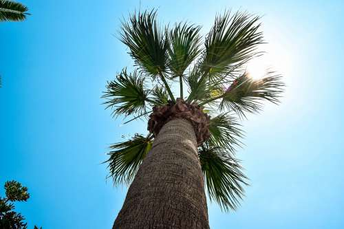 Palma Summer The Sky Holiday Holidays Tropical
