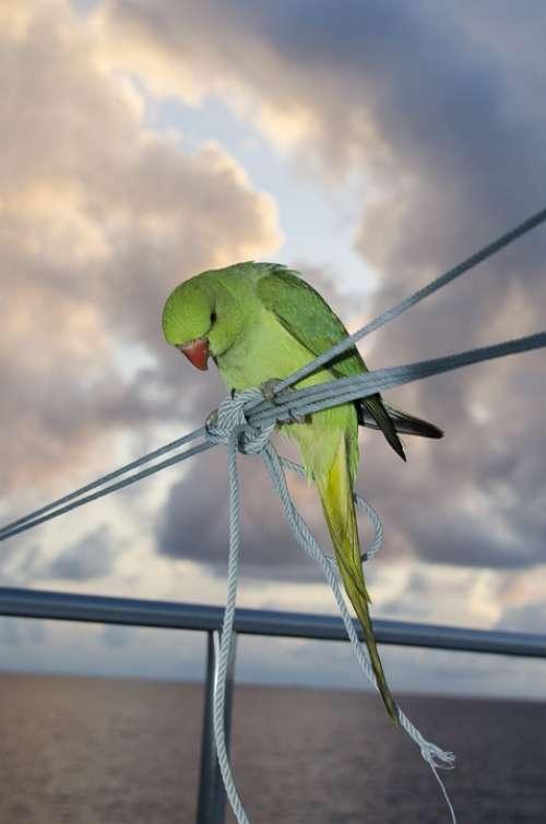 Parakeet Bird Green Animal