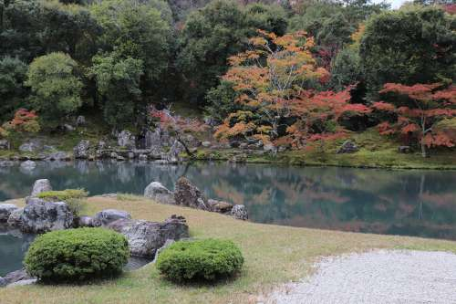 Park Tree Plant Temple Forest