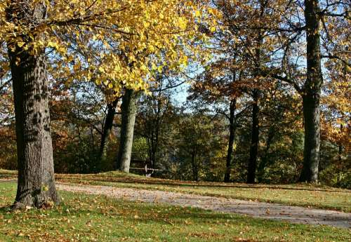 Park Away Autumn Forest Leaves Fall Foliage Tree