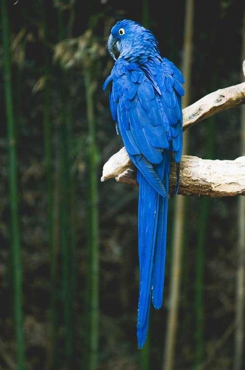 Parrot Bird Blue Animal Tropical Wildlife Nature