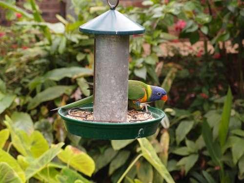 Parrot Bird Feeding Animal Wildlife Zoo Nature