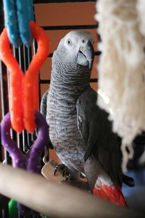 Parrot Bird Animal Pet Feather Beak Wing