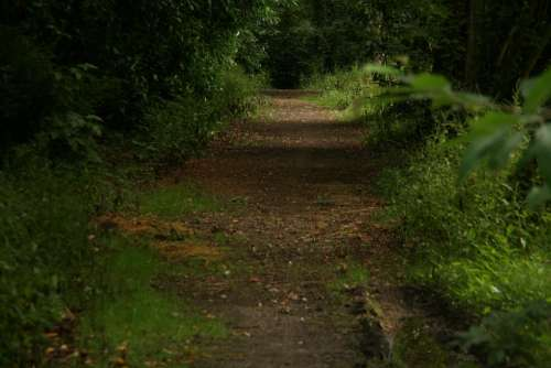 Path Trees Landscape Park Ride Leaves