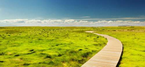 Pathway Green Grass Nature Landscape Scenic Sunny