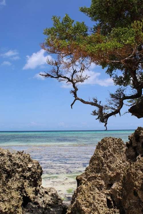 Pemba Island Holiday Vacation Sea Sun Water Ocean