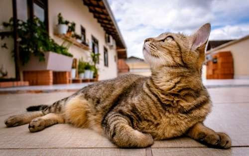 Pet Kitten Cat Feline Lying Outdoors