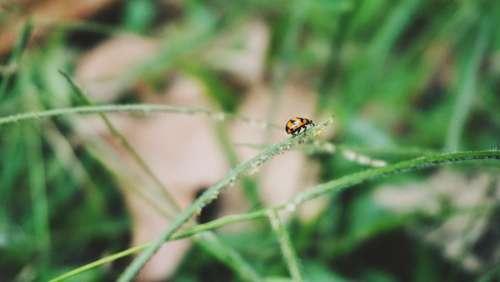 Petite Nature Ladybug Small Spring Garden