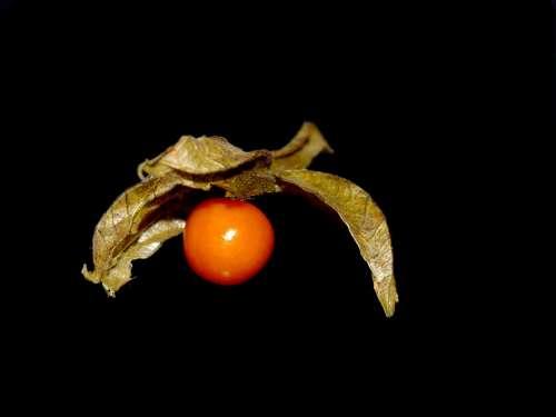 Physalis Vitamins Orange Fruit Exotic Healthy