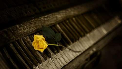 Piano Rose Yellow Vintage Keys Melody