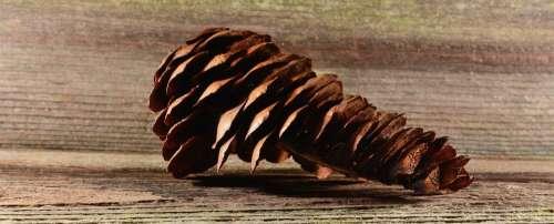 Pine Cones Tap Brown Conifer Wood Close Up