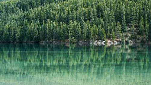 Pine Trees Pine Tree Water Lake Reflection Green