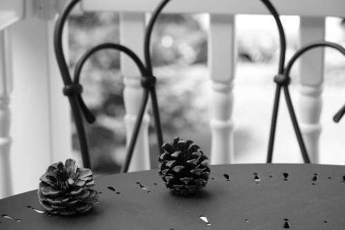 Pinecone Pinecones Nature Cone Pine