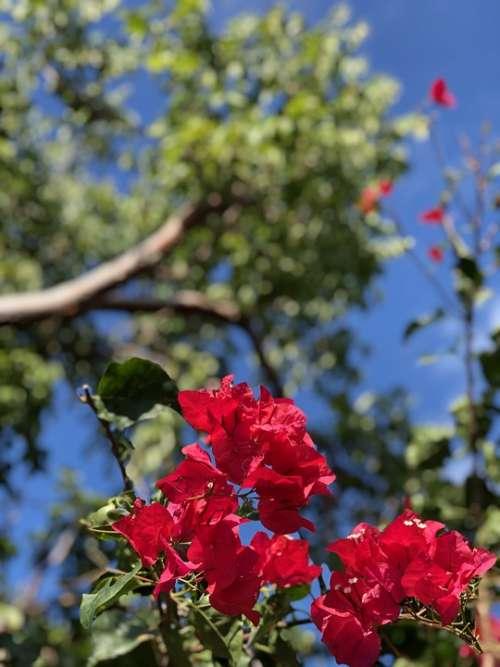 Pink Flowers Nature Garden Blue Sky