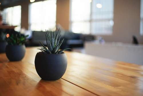 Plant Houseplant Indoor Pot Potted Table