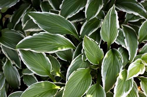 Plant Leaves Decorative Green White
