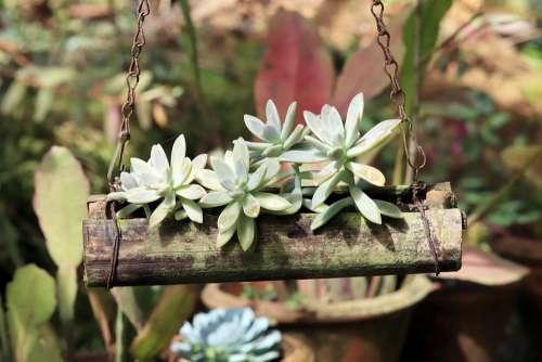 Plant Green Pot Garden Hanging Flower