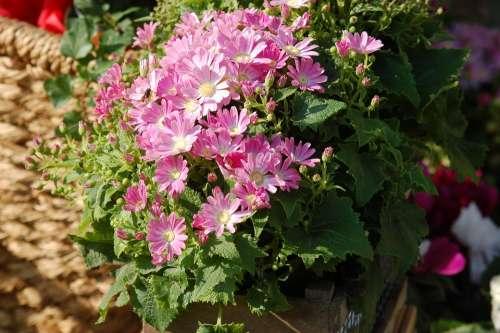 Plant Flowers Spring Bloom