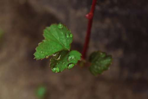 Plant Nature Leaf Green