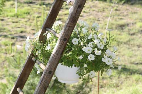 Plant Pot Scale Nature France Provence