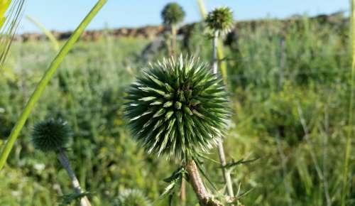 Plants Nature Flora Green Grass
