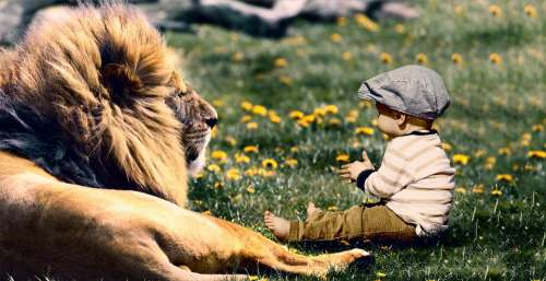 Play Child Lion Fun Boy Son Kid Happy Baby