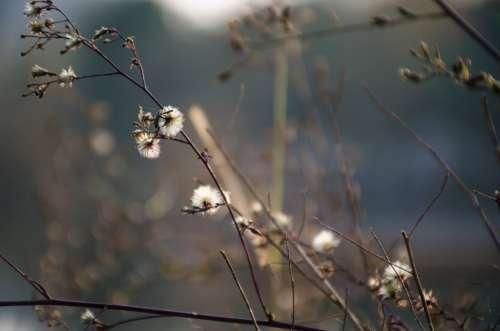 Plum Blossom Plant White Flower