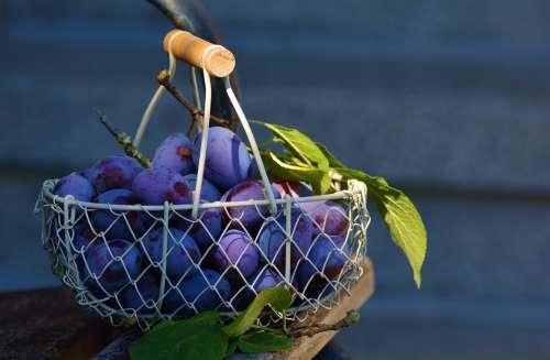 Plums Fruit Fruit Basket Blue Fruits Violet Plum