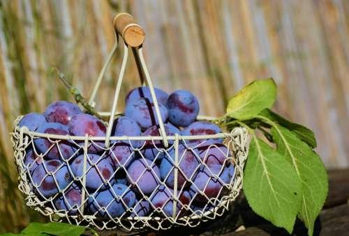 Plums Fruit Basket Fruit Violet Fruits Ripe