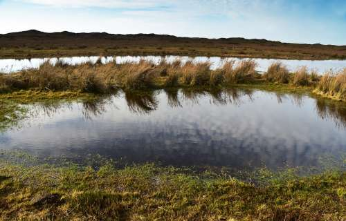 Pond Lake Water Nature Mirroring Landscape Grass