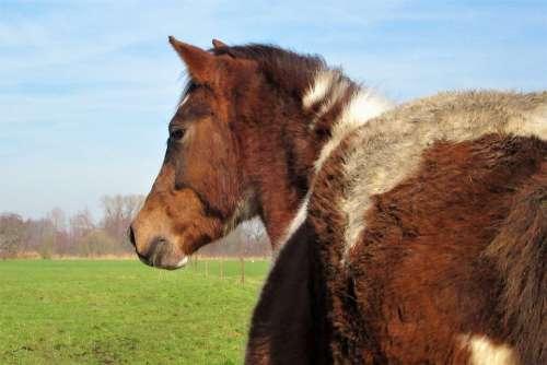 Pony Horse Horses Animal Mammal Countryside