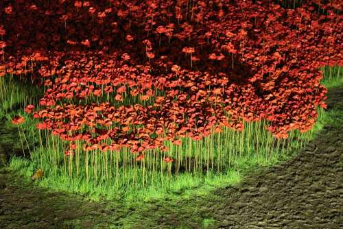 Poppies Rivers Of Blood Ceramic Ornaments Britain