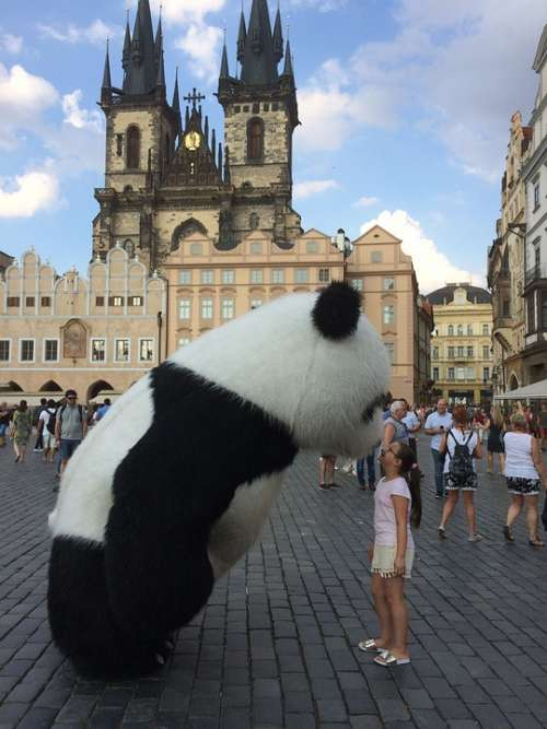 Prague Bear Panda Tourist Czech City Square