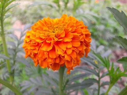 Profile Picture Flower Mug Flower Nature Cute