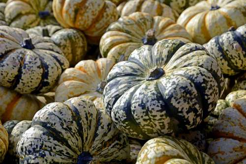 Pumpkin Gourd Vegetables Autumn Thanksgiving