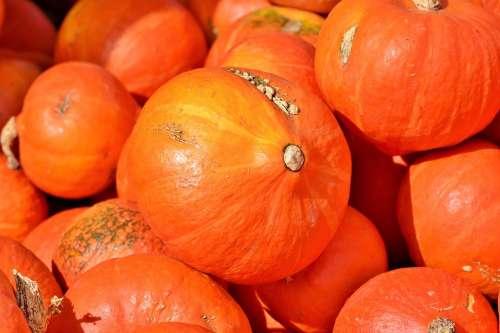 Pumpkin Fruit Autumn Cucurbita Maxima Choose Large