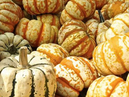 Pumpkin Gourd Decoration Structure Autumn Motives
