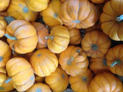 Pumpkins Squash Gourds Food Thanksgiving Yellow