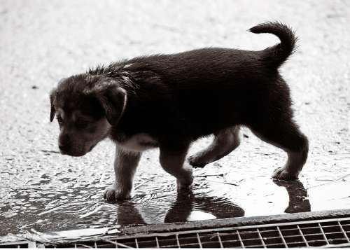 Puppy Wet Rain Dog Baby Sweet Dog Puppy Pet