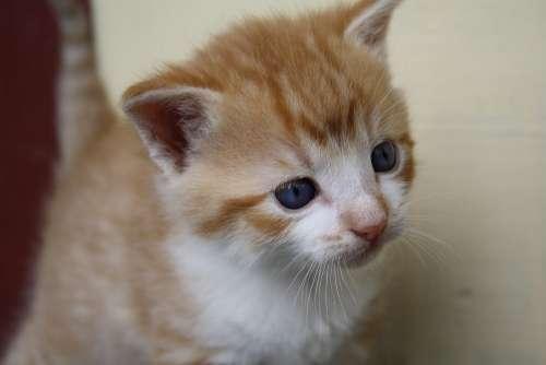 Pussycat Animal Kitten Pet Kitty Mammal