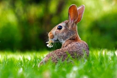 Rabbit Hare Animal Cute Adorable Lawn Grass