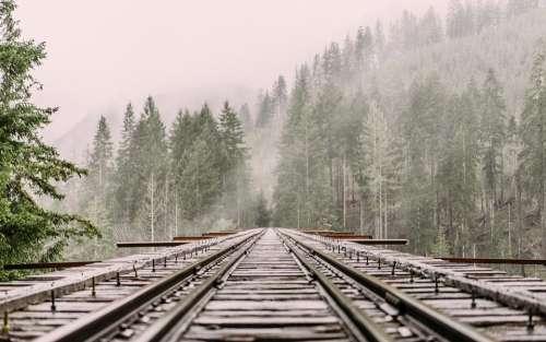 Railway Railroad Tracks Train Tracks Pine Trees