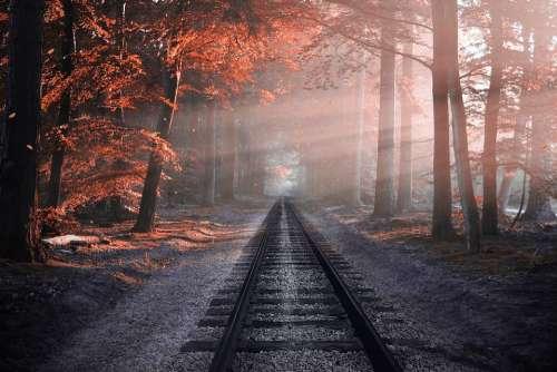 Railway Forest Trees Rails Autumn Colors Railroad