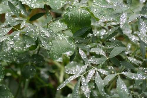 Rain Leaves Nature Drop