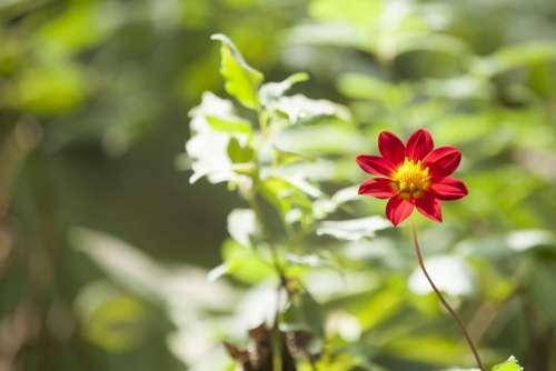 Red Flower Garden Plant Floral Nature Spring