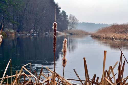 Reed River Nature Landscape Water Beach Lake