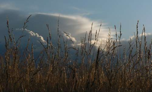Reed Clouds Sun The Nature Of The