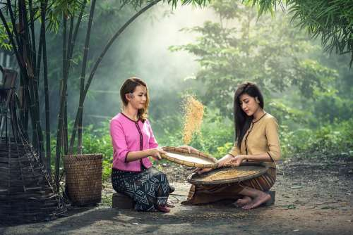 Rice Women Sitting Harvest Sow Sieve Adult Asia