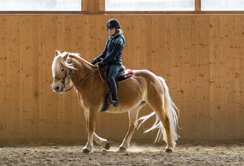 Ride Reithalle Lena Rocky Motard Horse Reiterhof